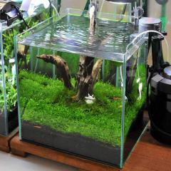 (水草)初めての流木レイアウトセット 30cmキューブ水槽用(水草・流木のみ) 熱帯魚 本州四国限定