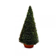 (水草)巻きたて モスツリー(クリスマスモス)Sサイズ(無農薬)(1個)