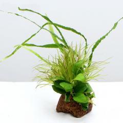 (水草)Plants Arrangement ザ ボンサイ Ver.2(1個)