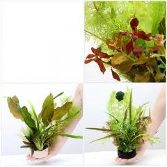 (水草)ハニカムシェルター 水中葉寄せ植えミックス(1個) 北海道航空便要保温