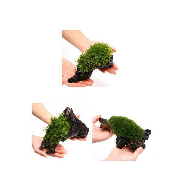 (観葉植物/苔)テラ向け おまかせ苔付流木 Mサイズ(約20cm)(3個)