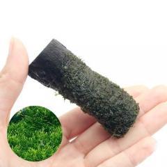 (水草)巻きたて ウィローモス カット流木 ミニサイズ(8cm以下)(無農薬)(1本)