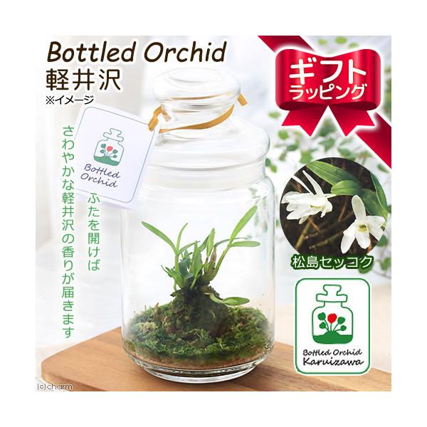 (観葉植物)ギフト ボトルドオーキッド 軽井沢 松島セッコク 手提げ袋付 本州 四国限定