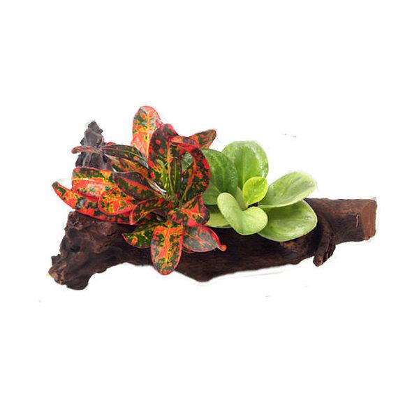 (観葉植物)ビバリウム用 レイアウト流木 おまかせ観葉植物付(1本) 北海道冬期発送不可
