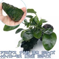 (水草)アヌビアスナナ付 流木+ウィローモス 風山石(各SSサイズ) 熱帯魚
