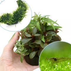 (水草)ハニカムシェルター 寄せ植えミックス 育成済 ウィローモス 流木とミナミヌマエビ付 北海道航空便要保温
