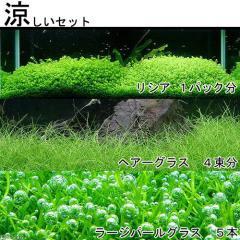 (水草)涼しいセット (無農薬)(1セット)