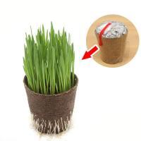 (観葉)種まき済み ペットグラス栽培 ECOポット 燕麦 1ポット
