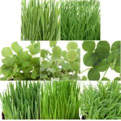 (観葉植物)種まき済み ペットリーフ栽培 ECOポット よくばりセット(8ポットセット)
