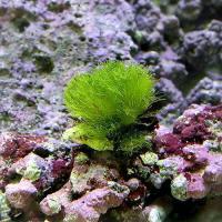 海藻・海浜植物