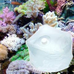 (海水魚)足し水くん テナーボトル コック付き 天然海水(海洋深層水) 10リットル 航空便不可・沖縄不可