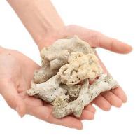 (海水魚 ろ材)Bact Coral Rock(ばくと コーラルロック) 2リットル ネット入り バクテリア付き ライブストーン