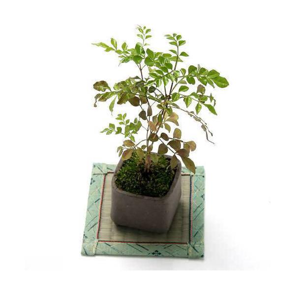 益子焼 苔BOX 小 焼締 四角 鉢底穴あり(W6×D6×H6.5cm)ミニミニ盆栽鉢