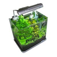 (水草 熱帯魚)おまかせ水上葉 レイアウトセット 30cm水槽用 6種(無農薬)(1パック)(水草説明書付) 北海道航空便要保温
