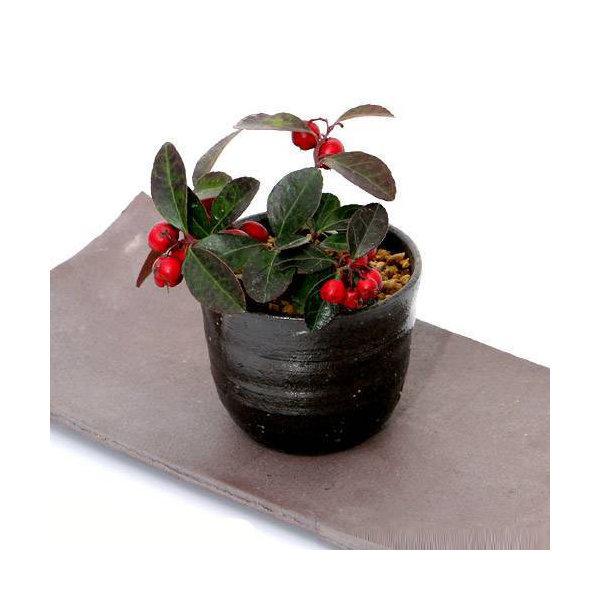 手作り山野草鉢 益子焼 穴有植木鉢 炭化 鉢底穴あり 直径8.5cm ミニミニ盆栽鉢
