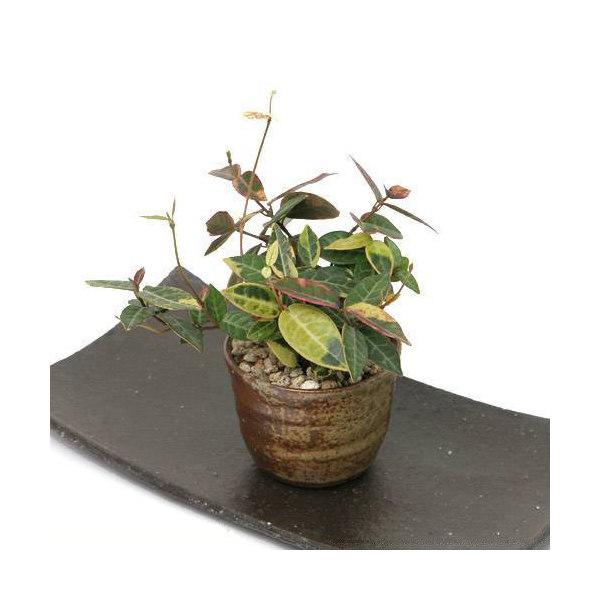 手作り山野草鉢 益子焼 穴有植木鉢 還元 鉢底穴あり 直径8.5cm ミニミニ盆栽鉢