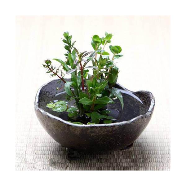 益子焼 ミニ水盤 大 炭化 ミニミニ盆栽鉢
