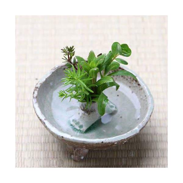 益子焼 ミニ水盤 小 灰釉 ミニミニ盆栽鉢