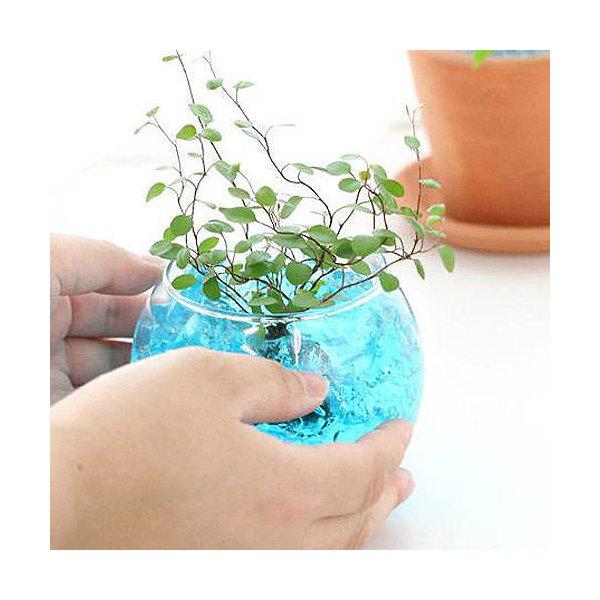 ガラスベース バブルボール SS エアプランツ 多肉植物 ティランジア ガラス