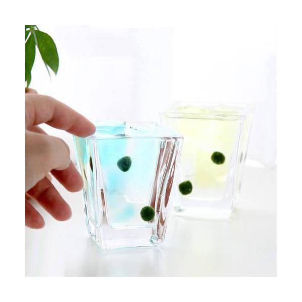ガラスベース スクエアグラス S エアプランツ 多肉植物 ティランジア ガラス