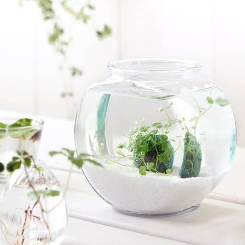 (水草)私の小さなアクアリウム ~窓辺のノチドメボール~ アメリカ製ドラム金魚鉢 小 本州・四国限定 お一人様3点限り