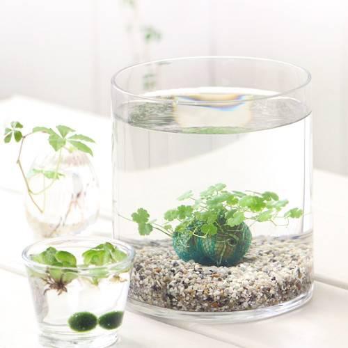 (水草)私の小さなアクアリウム ~窓辺のノチドメボール~ スモールグラス(直径14.0×H18.0cm) 本州・四国限定