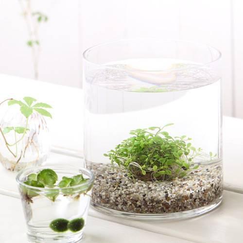 (水草)私の小さなアクアリウム ~窓辺のグロッソスティグマボール~ スモールグラス(直径14×H18cm) 本州・四国限定