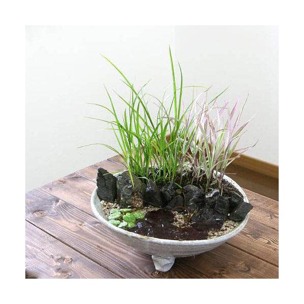 益子焼 足付平鉢 白マット 盆栽鉢