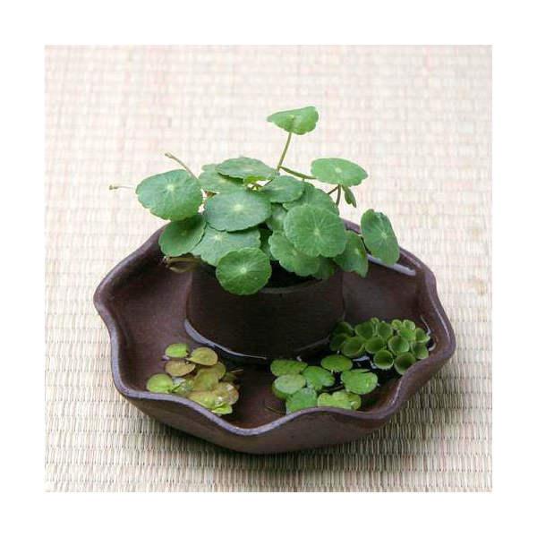益子焼 苔受皿 深小 赤楽 ミニミニ盆栽鉢