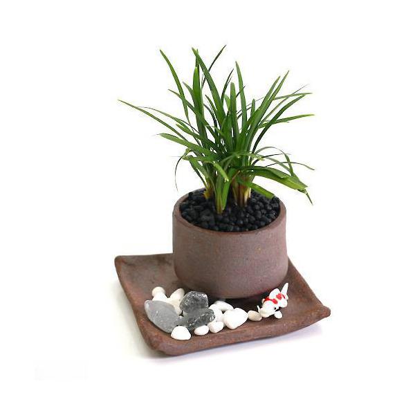 (山野草/盆栽)リュウノヒゲ おまかせ益子焼鉢植え 丸型 小(1鉢)(受け皿付き)