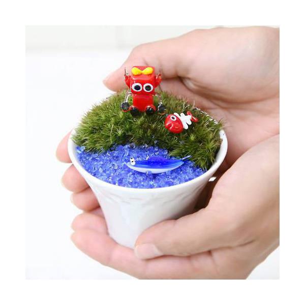 (観葉植物)私のオアシス チャーボのさかな捕り  おまかせコケのホワイト磁器カップ植えセット