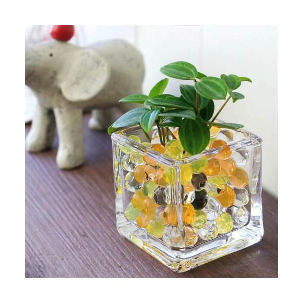 (観葉植物)おまかせオアシス苗とブロックグラスS イエローミックスセット