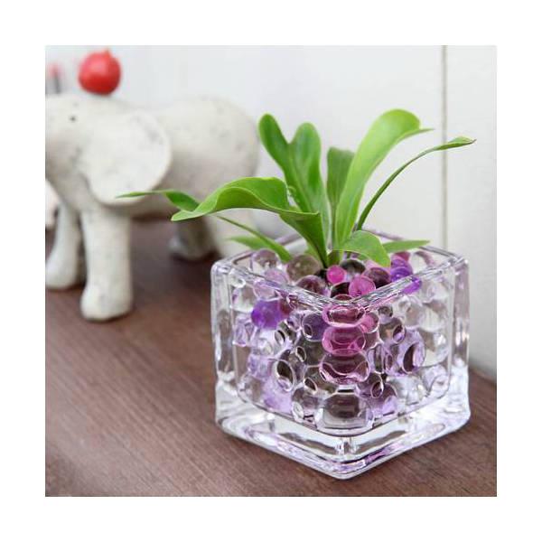 (観葉植物)おまかせオアシス苗とブロックグラスS パープルミックスセット