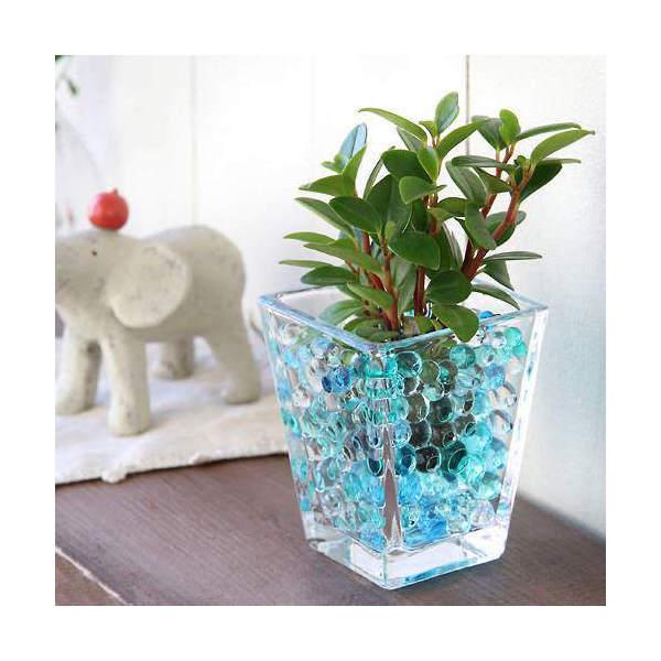 (観葉植物)おまかせオアシス苗とスクエアグラスS ブルーミックスセット 北海道冬期発送不可