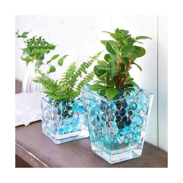 (観葉植物)おまかせオアシス苗とブロックグラス・スクエアグラス2Pセット ブルーミックス