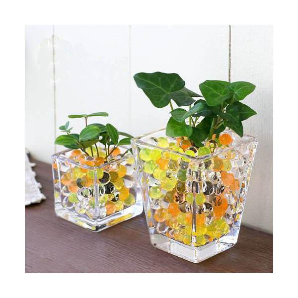 (観葉植物)おまかせオアシス苗とブロックグラス・スクエアグラス2Pセット イエローミックス