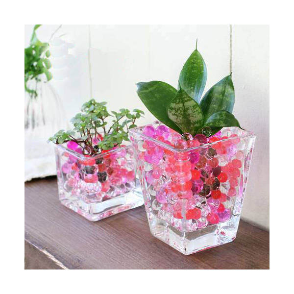 (観葉植物)おまかせオアシス苗とブロックグラス・スクエアグラス2Pセット レッドミックス 北海道冬期発送不可