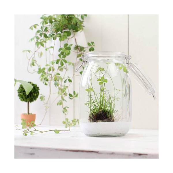 (水草)私の小さなアクアリウム ~窓辺のベトナムクローバーボール~ キャニスター式ボトル 寸胴型 本州・四国限定