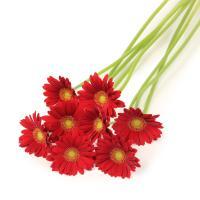 【第一園芸】ガーベラの花束 赤