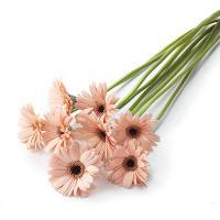 【第一園芸】ガーベラの花束 ピンク