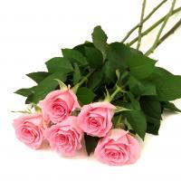 【第一園芸】バラの花束 ピンク [FF]