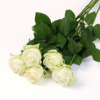 【第一園芸】バラの花束 白