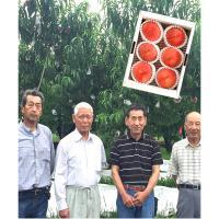 【自然派果物】山梨県 土葉会(どようかい)の桃 6玉(約1.5kg)
