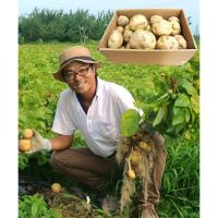 【自然派野菜】 芳賀大輔さんのじゃがいも5kg【産地直送】