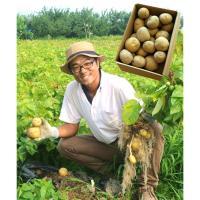 【自然派野菜】 芳賀大輔さんのじゃがいも3kg【産地直送】