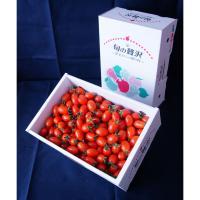 【自然派野菜】新鮮採れたて アグリゲート生産者の会のミニトマト(アイコ)3kg【ビッグサイズ】【産地直送】
