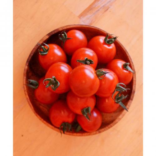 【自然派野菜】新鮮採れたてアグリゲート生産者の会のミニトマト(CF千果)約1kg【産地直送】