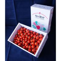 【自然派野菜】新鮮採れたて アグリゲート生産者の会のミニトマト(CF千果)3kg【ビッグサイズ】【産地直送】