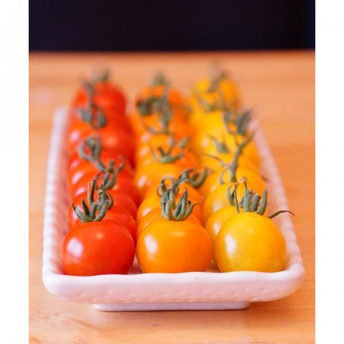 【自然派野菜】新鮮採れたて アグリゲート生産者の会のミニトマト(CF千果)約1kg【産地直送】【4箱まで同梱(送料1口で出荷)可能】