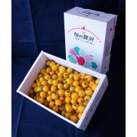 【自然派野菜】新鮮採れたて アグリゲート生産者の会のミニトマト(イエローミニ)3kg 【ビッグサイズ】【産地直送】